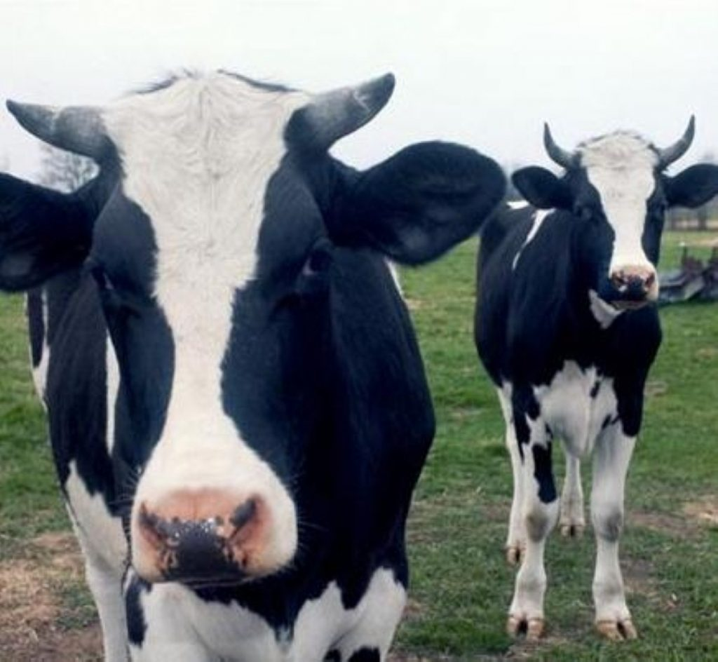 The farming industry is in crisis today as the FMD outbreak is linked to Pirbright.