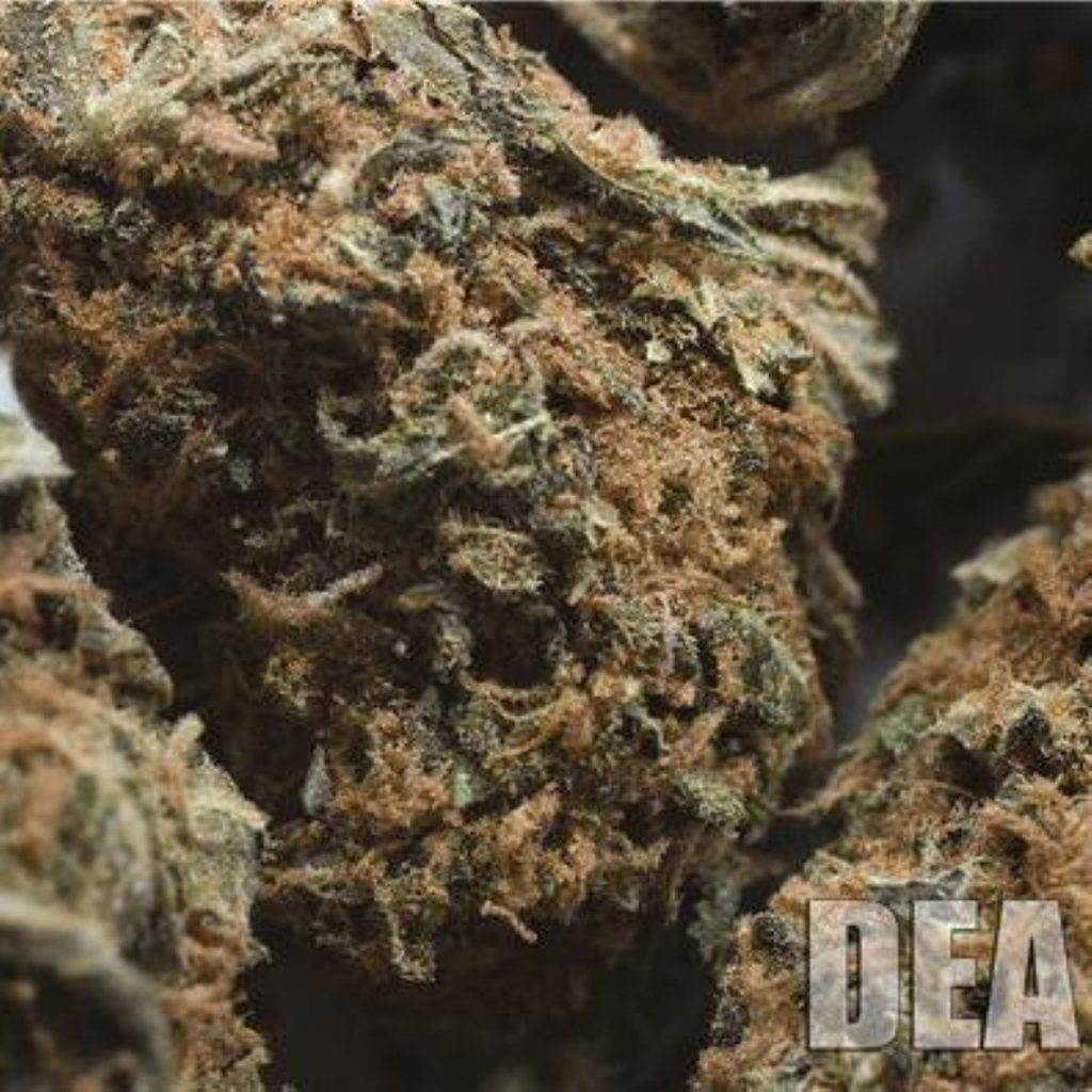 Skunk: considered more powerful than normal cannabis