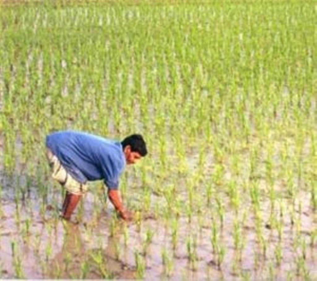 Donations to World Food Programme need to double