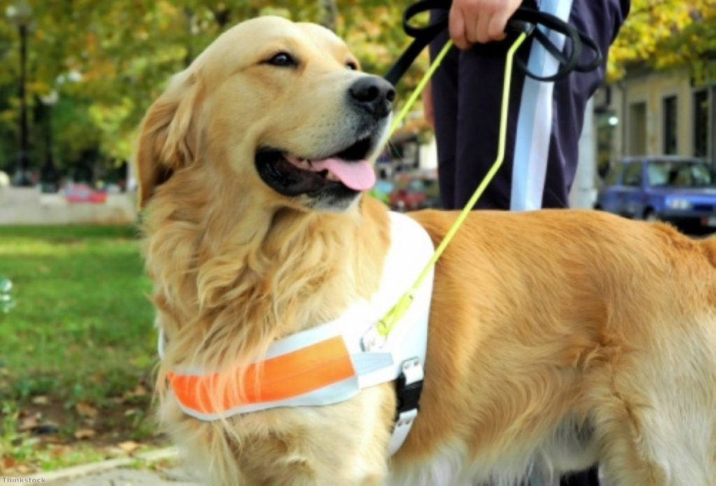MPs: current dangerous dog laws have comprehensively failed to protect people and guide dogs alike.