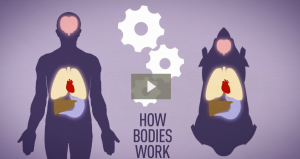 VIDEO: Animal testing and pharmacology