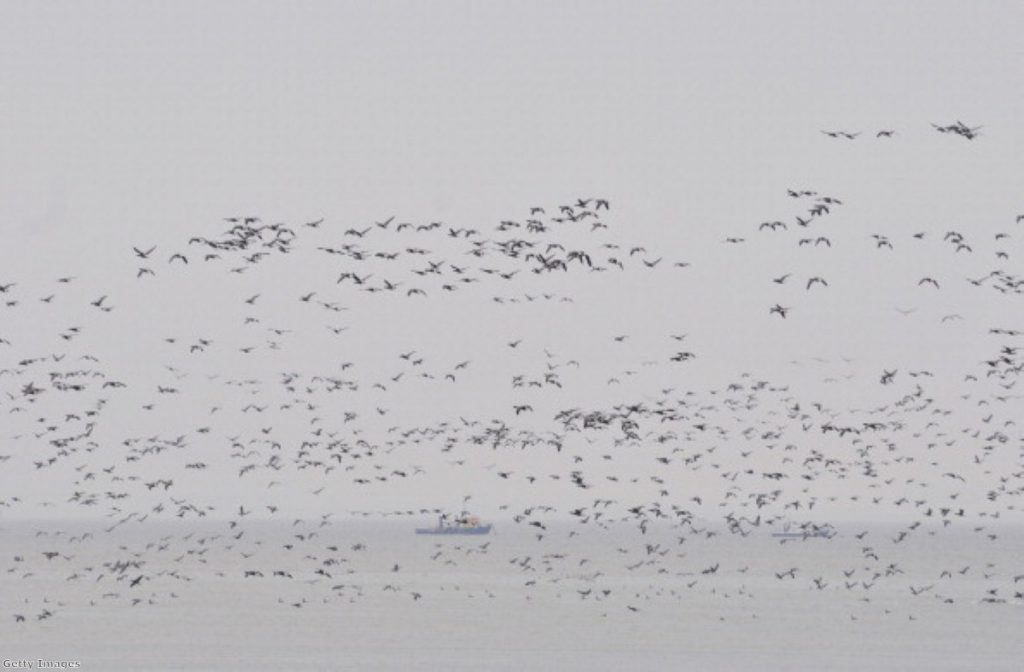 """Migrating birds in the Thames Estuary would cause a """"high risk"""" of bird strike."""