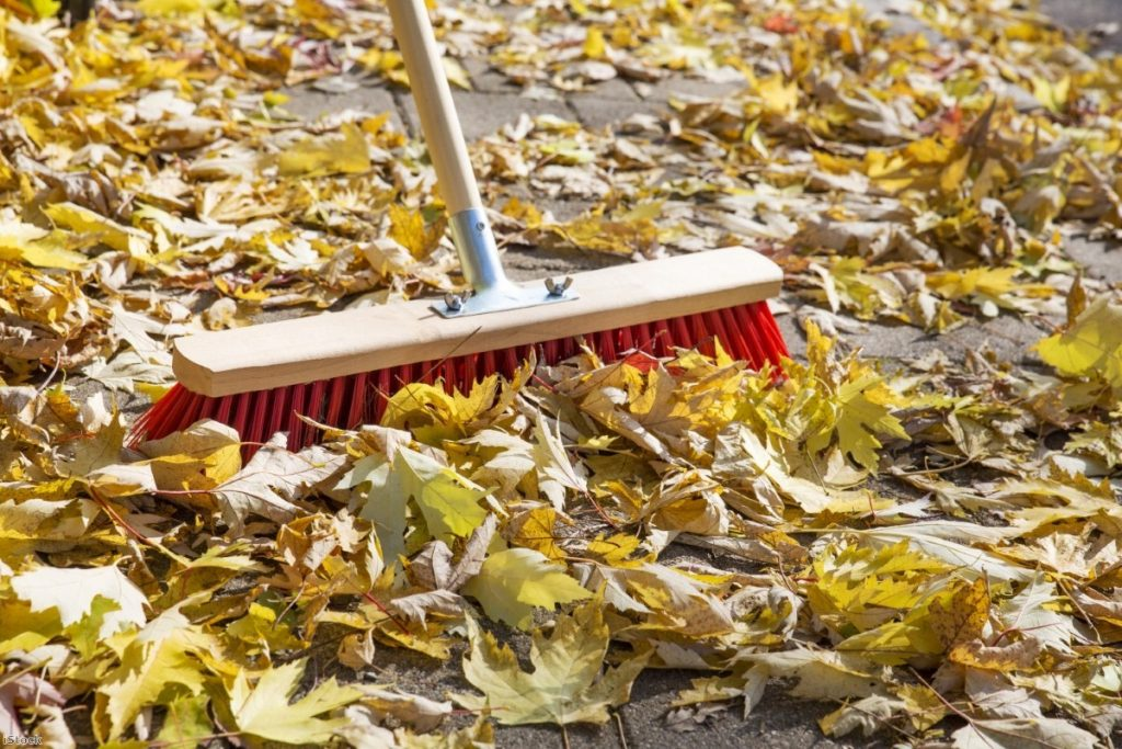 """Two elderly ladies in Birmingham have been threatened with fines for sweeping up leaves."""