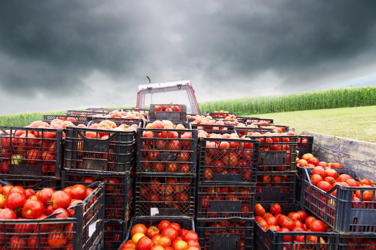 Agricultural imports into the EU have to go through specialised checkpoints