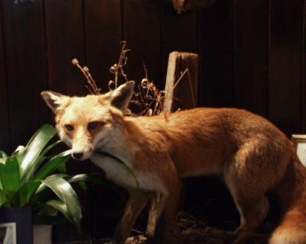 Court of appeal rejects another challenge to the Hunting Act 2004