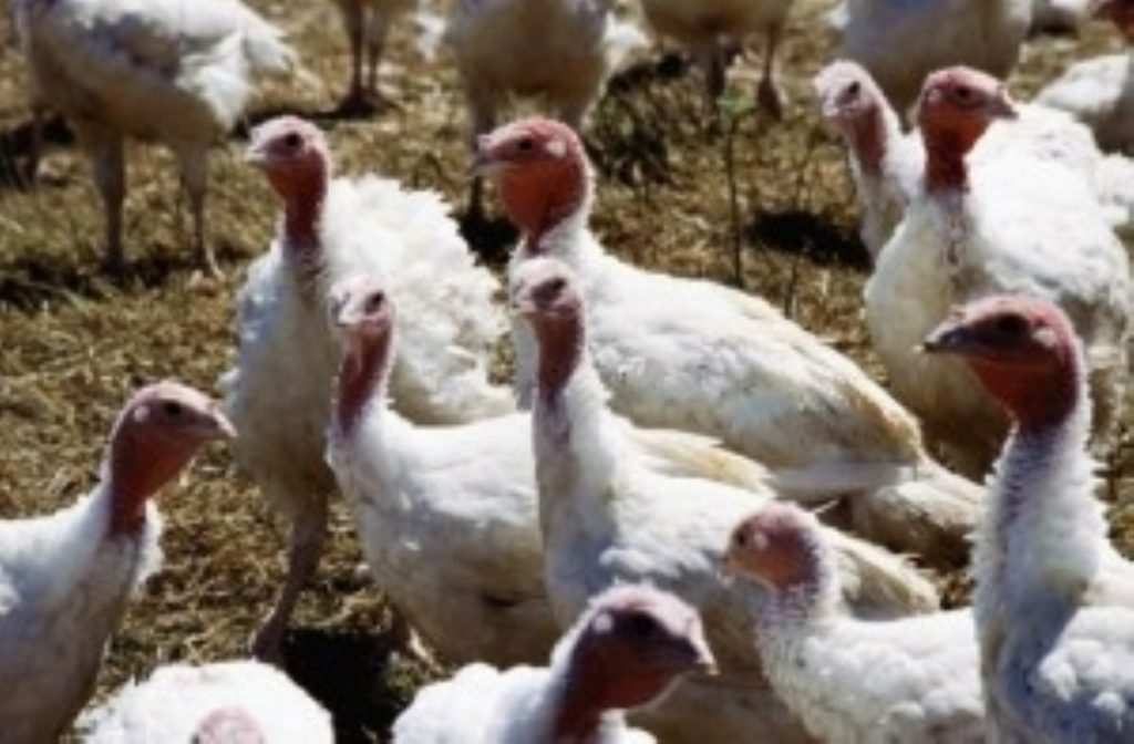 Government says all bird flu procedures were kept to