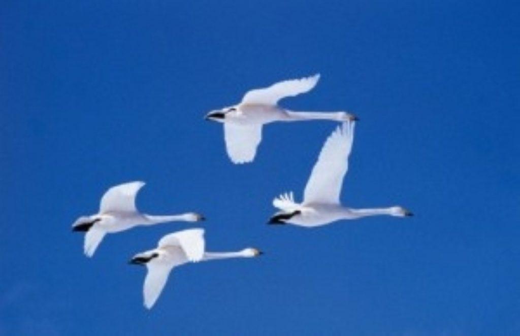 Scientists criticise UK bird flu plans