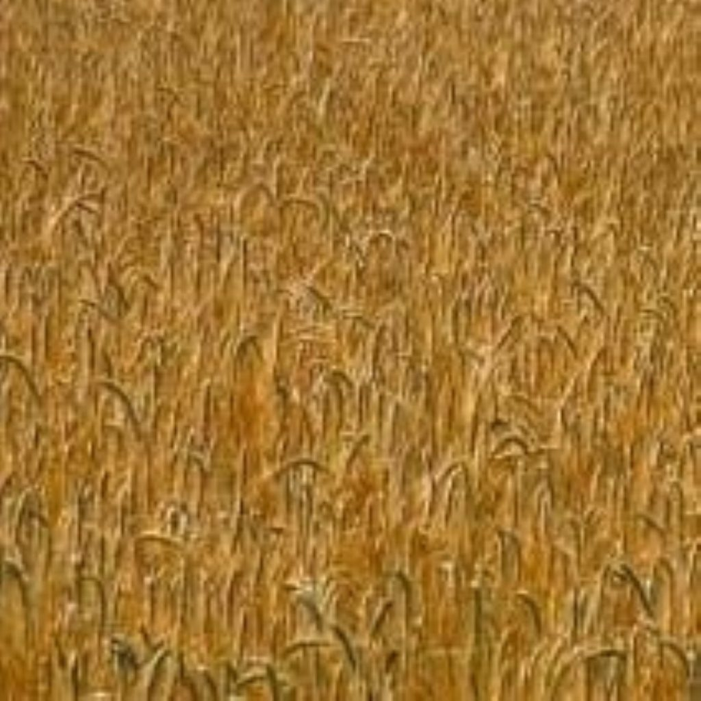 GM crops need £2 billion investment, the society claimed