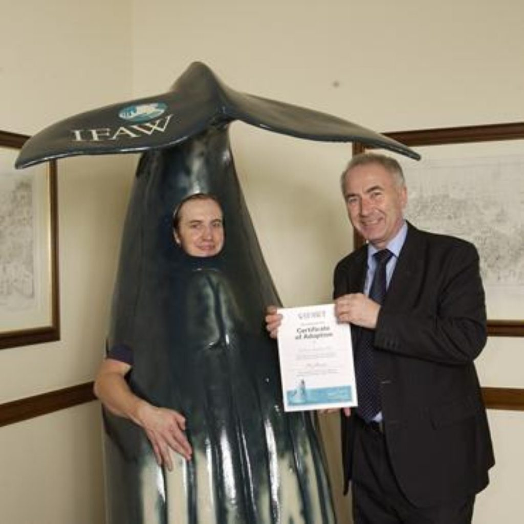 MP Michael Foster adopts a humpback whale