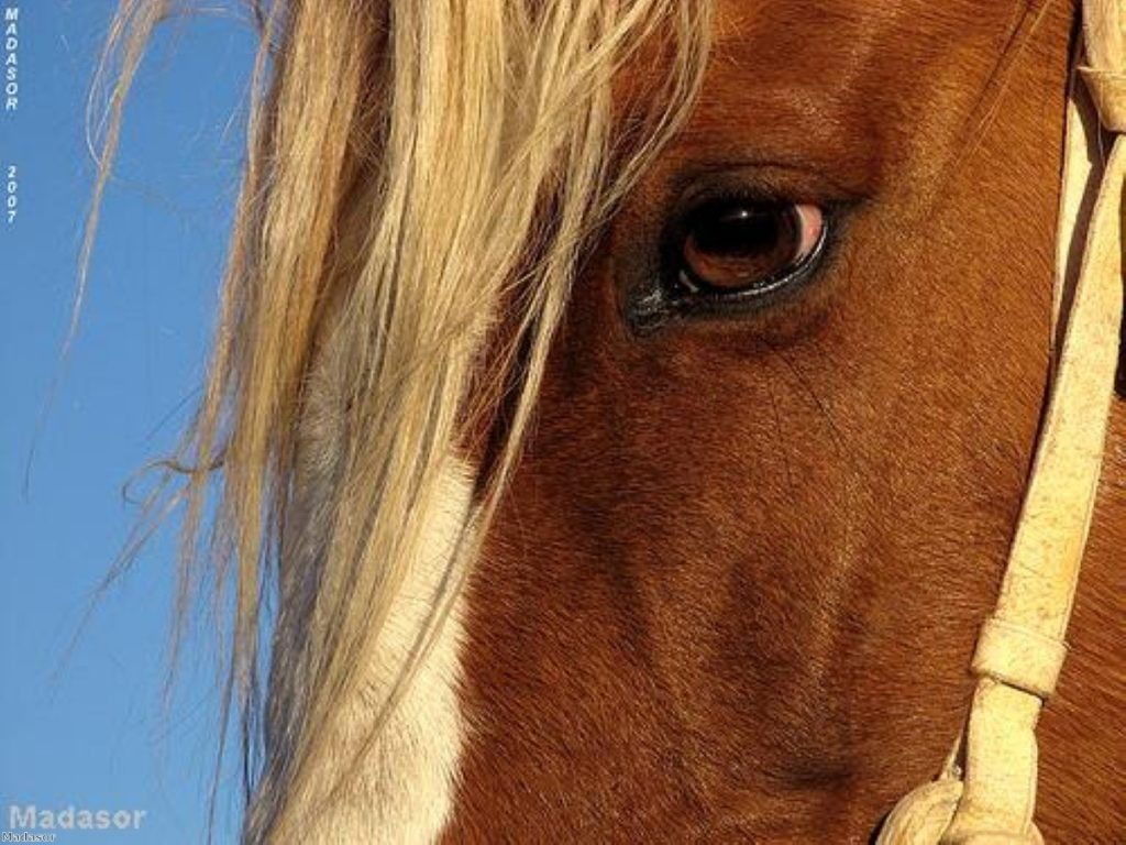 Horse meat scandal could engulf Downing Street.