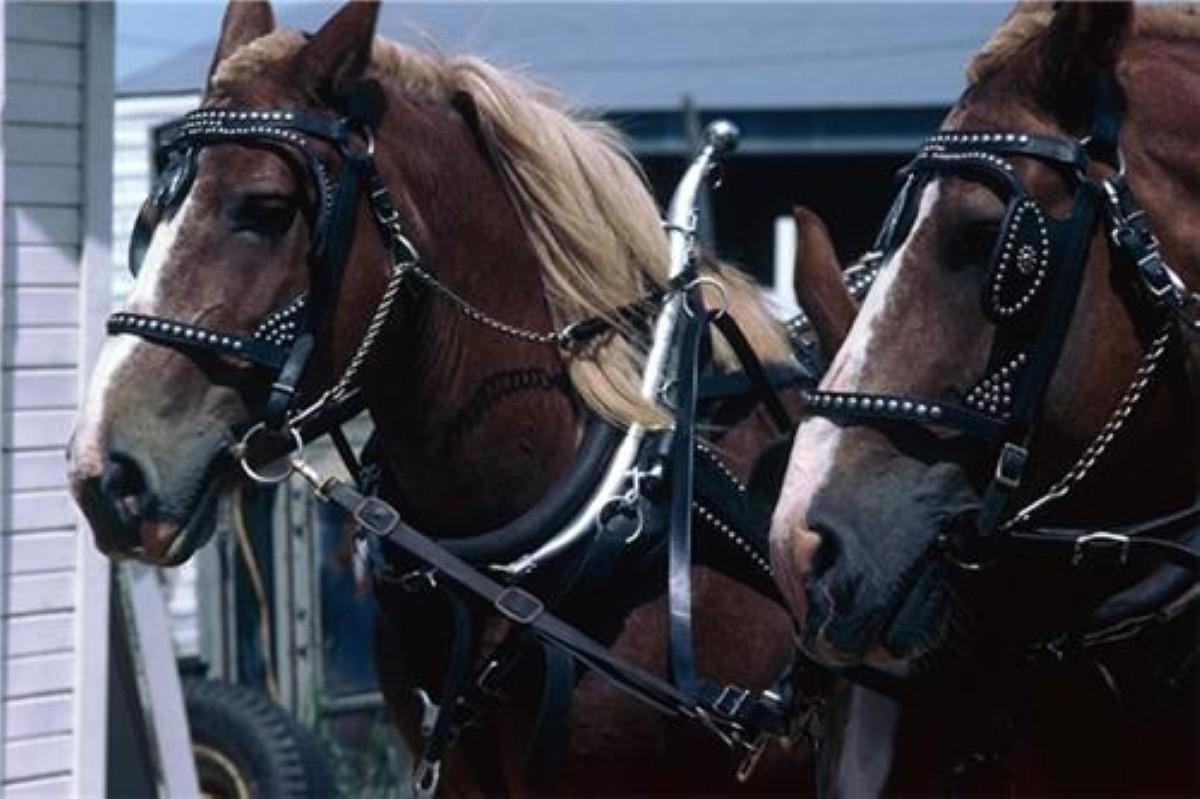 'More horses than tanks' - Hammond unhappy with Treasury jibes