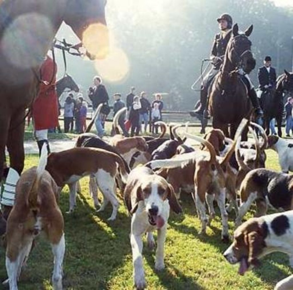 The Tories will offer a free vote on hunting with dogs