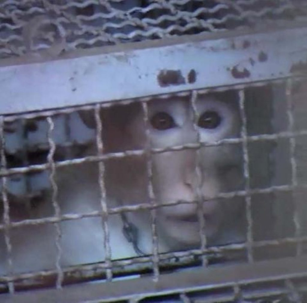 """Monkeys are bred and kept in """"deplorable"""" conditions"""