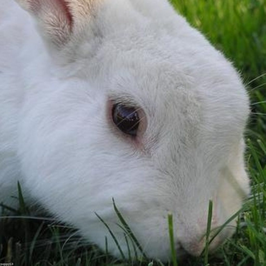 There was a sharp increase in experiments on animals in 2008