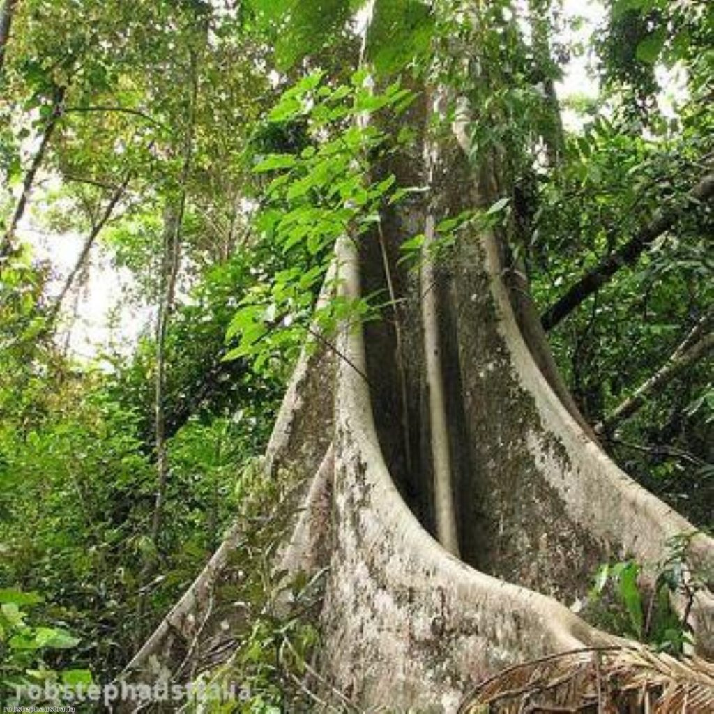Rainforest could be damaged