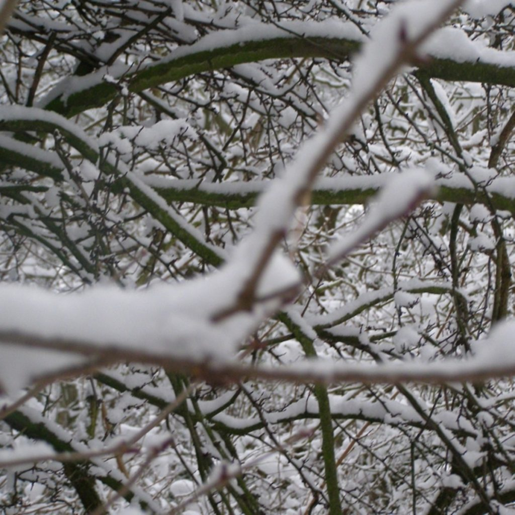 Plans for this winter are not robust enough, MPs on the health committee have warned