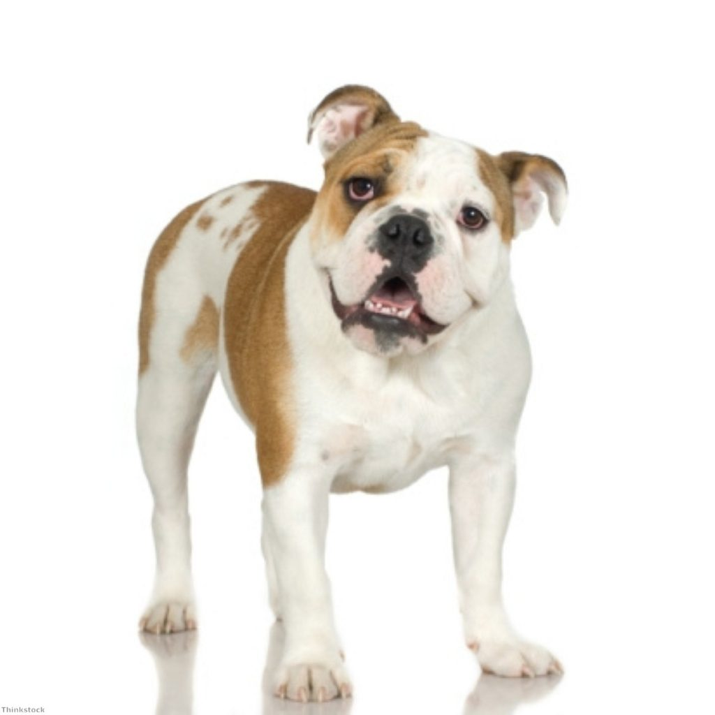 This British bulldog is in for a fight if Cameron presses ahead on an EU referendum