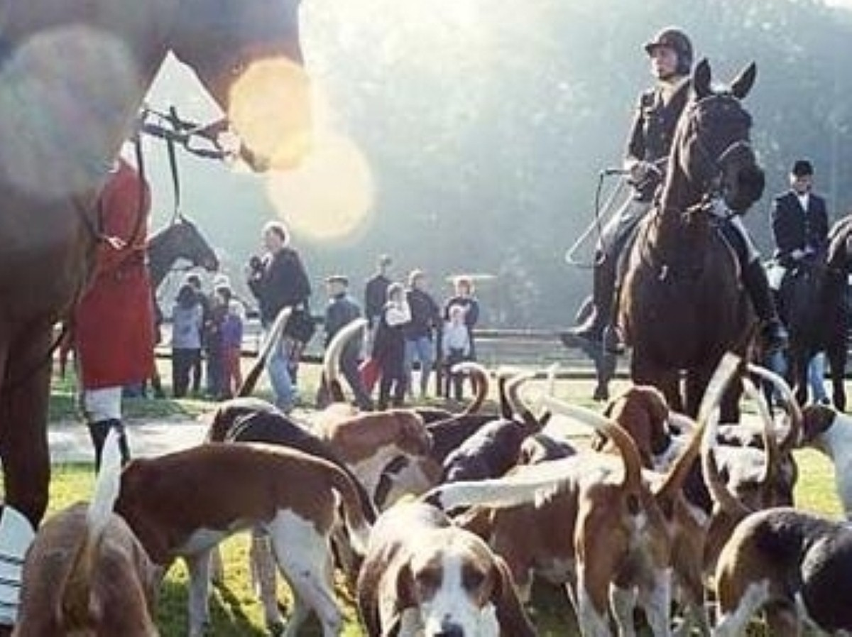 Hunting with dogs? DPMQs is now firmyl on the bloodsport calendar