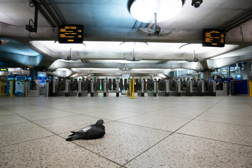 A pigeon sits on the empty concourse at Westminster underground station in London during England's third national lockdown to curb the spread of coronavirus. (Credit: Press Association)
